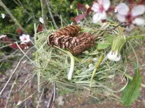 Make your own bird's nest activity for kids