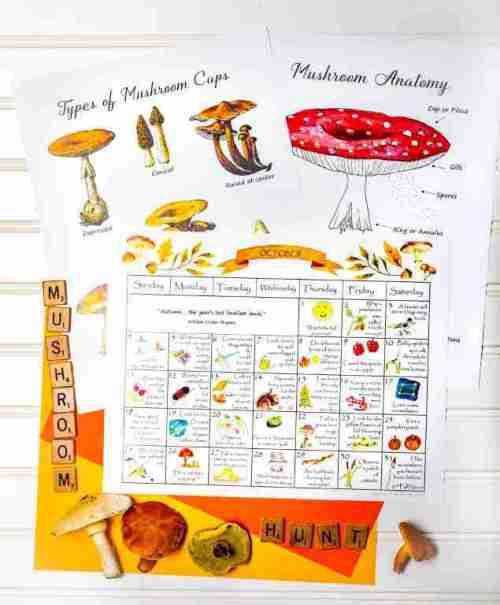 October Nature Calendar