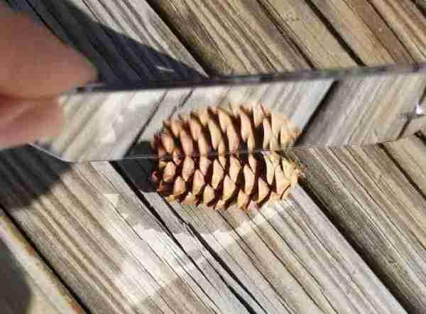 Pinecone-symmetry