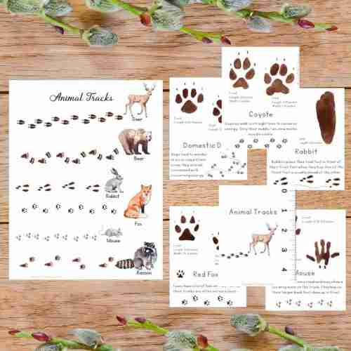 Animal Track Posters and Cards