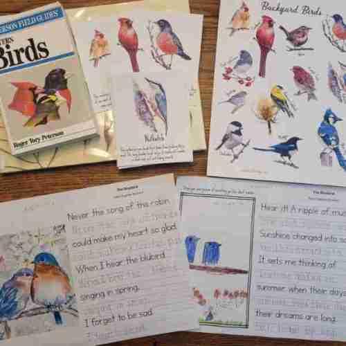 Bird Study Resources