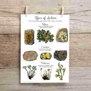 Types of Lichen Poster