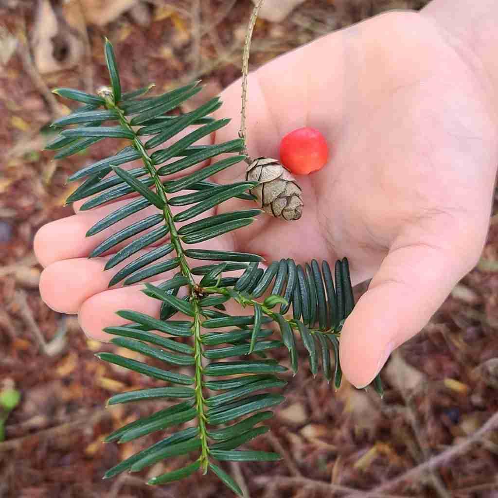 Nature Study Small Wonders