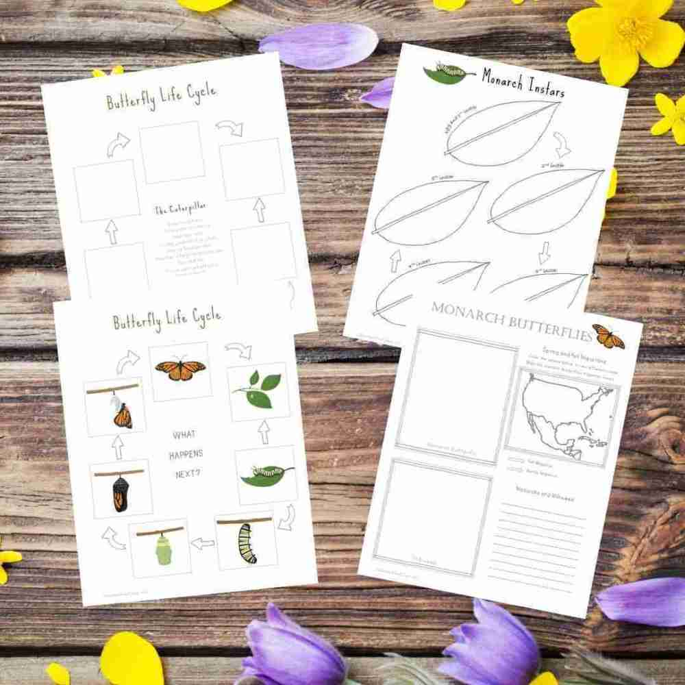 Butterfly Life Cycles and Migration Sheets