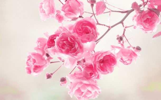 flower wallpaper 13