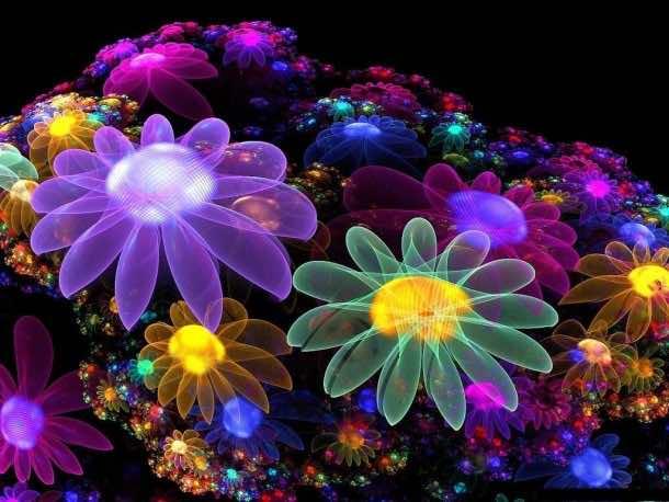 flower wallpaper 5