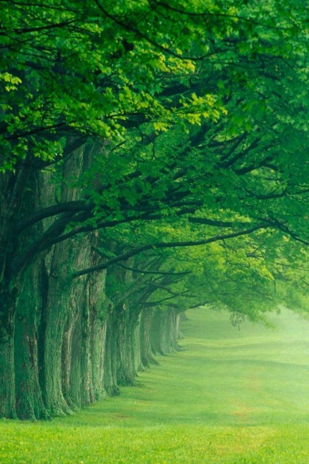 nature wallpapers 42