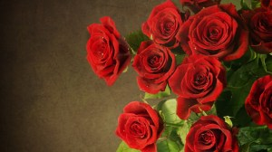 background images with roses 3