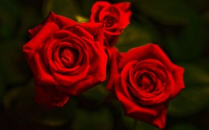 background images with roses 8