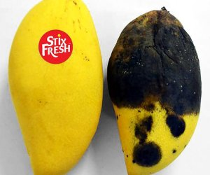 Stixfresh Stickers Can Keep Fruits Fresh For Two Weeks