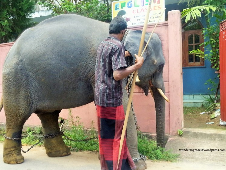 An elephant goes to school