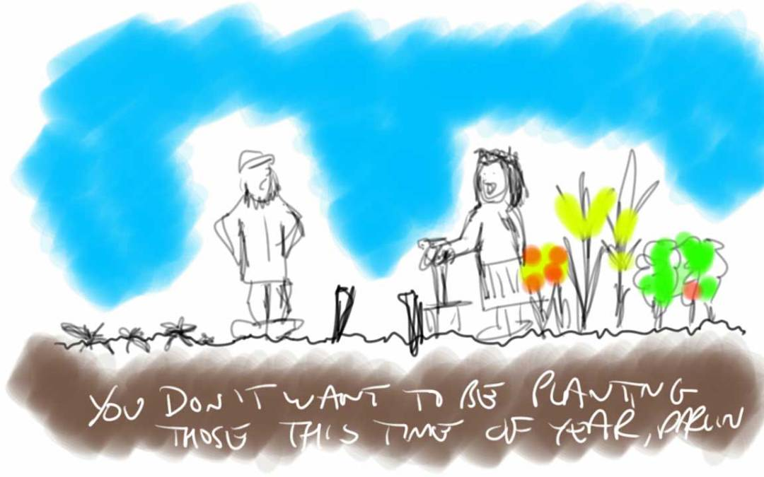 cartoon about sexism on allotment