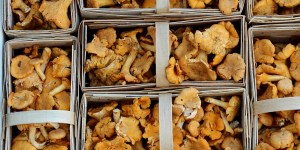 Chanterelle mushrooms can be used in cocktails