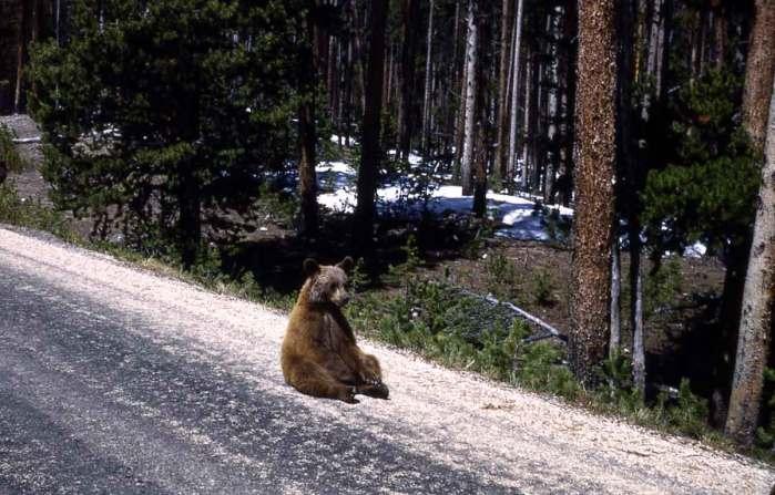 beren-op-de-weg