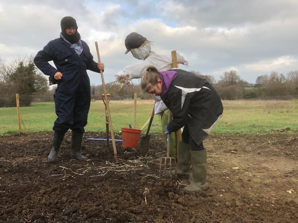 Planting Rhubarb on the Wonderpost allotment