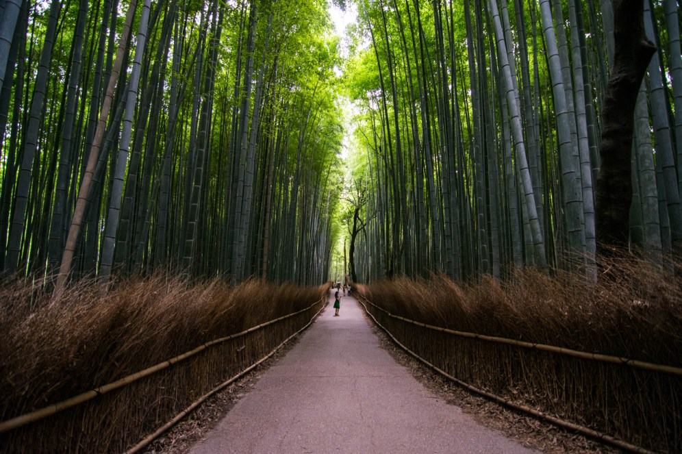 A trail lined in dried grass cuts through the Arashiyama bamboo forest in Kyoto Japan. A Lady in a green dress pauses in the middle of the trail. Sunlight shines trough the tree leaves.