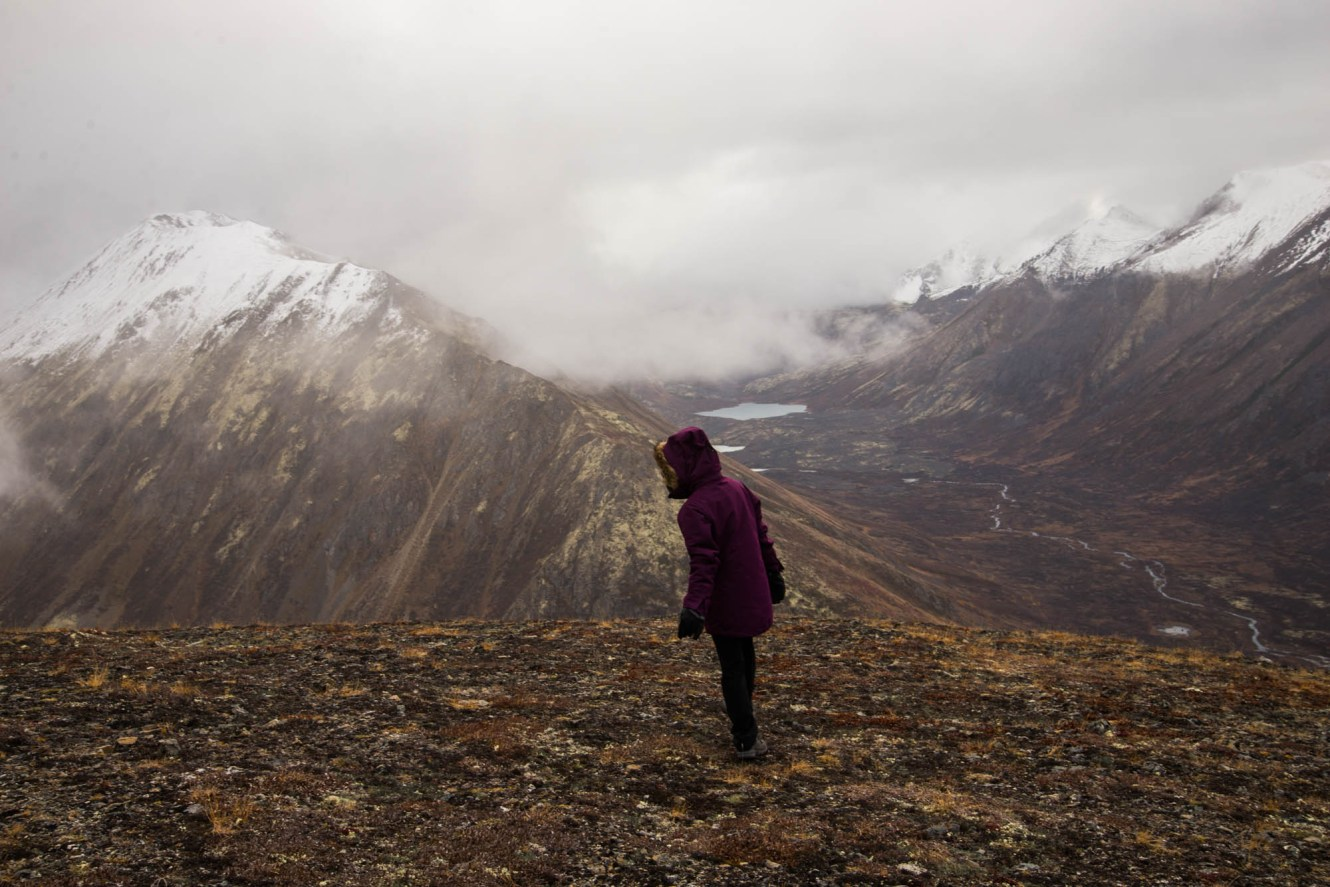 A young woman in a large purple jacket curiously peaks over a hill high on top of Harp mountain near Eagle river alaska. The season is Late Fall and the alpine plants are dying. It looks windy cold and gloomy.