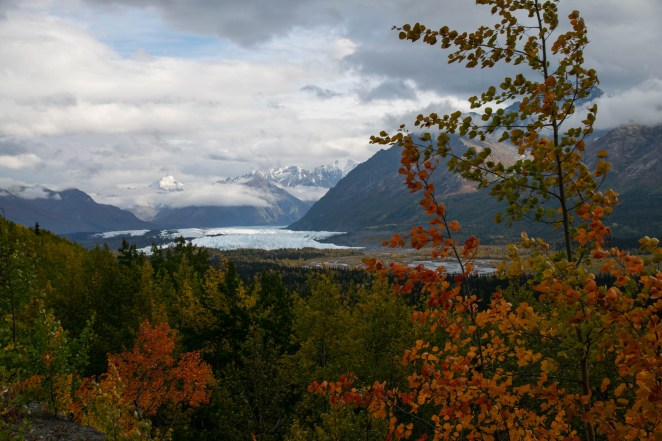 Mananuska glacier is seen from afar with fall tree colors in the foreground.