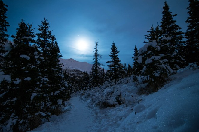 Light clouds soften and disperse the moonlight over a snow covered trail in an Alaskan forest. The blue light engulfs the entire scene.