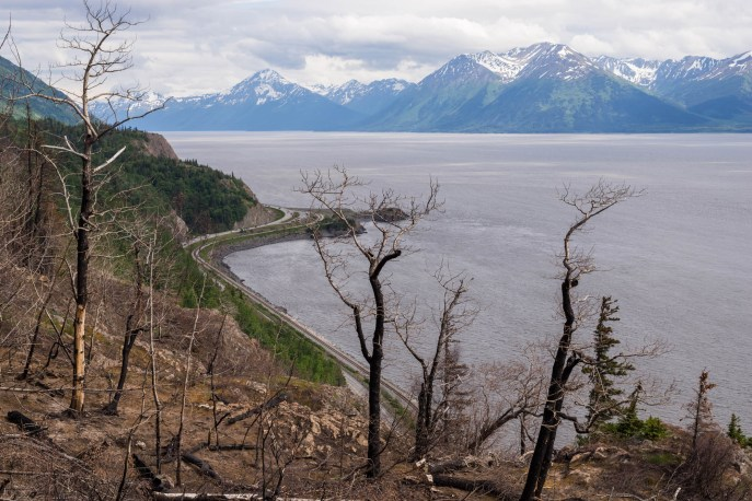 Burned trees from a recent wildfire still stand on a montain slope overlooking the ocean and a scenic road. Tall mountains rise from the other side of the ocean at Turnagain arm, Alaska