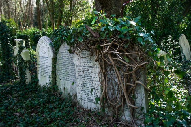 Old tombstones in London's Highgate cemetary are shown overgrown by vines.