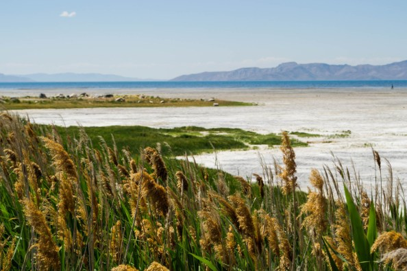 The Great Salt Lake 0217