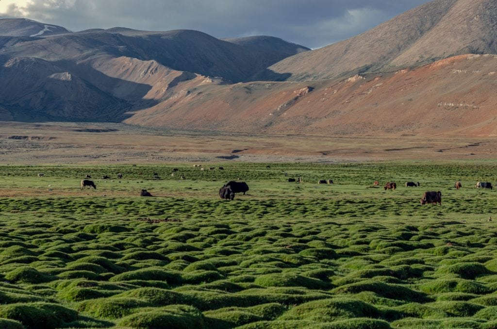 Changthang Grasslands