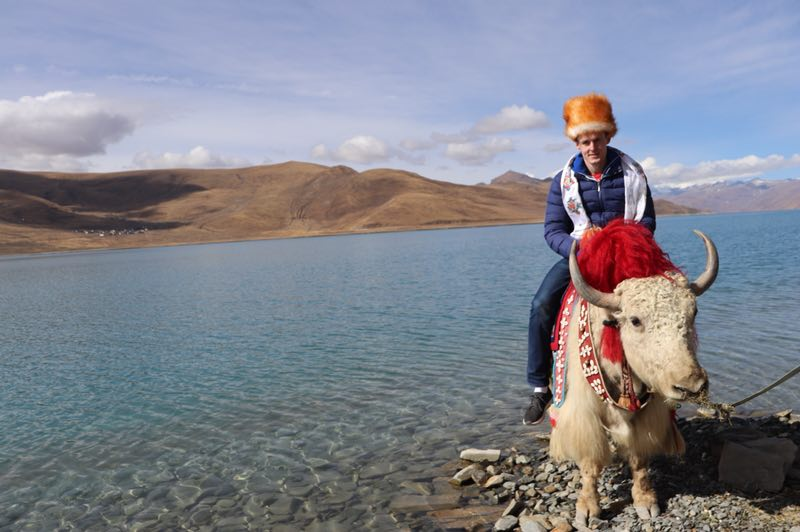 Taking photos with white yak by the Yamdrok Lake in Tibet