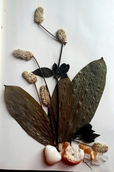 Dried Leave assemblage