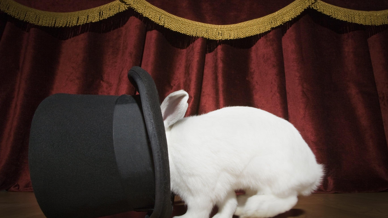 wonkhe-rabbit