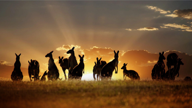 wonkhe-kangaroos