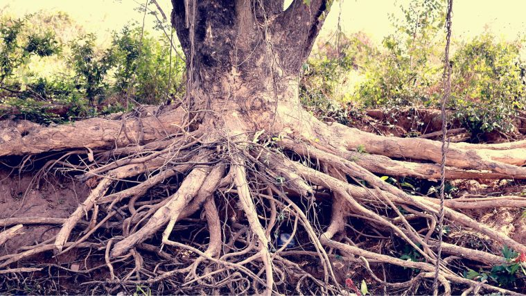 Wonkhe-root-and-branch