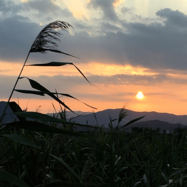 untitled-sunset-with-reed
