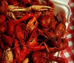 Who's Your CrawDaddy?