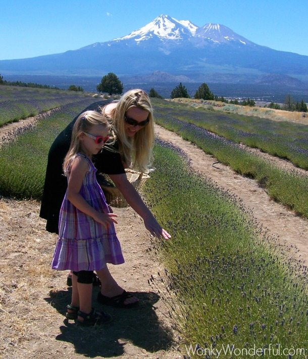 blonde lady and little girl looking at the lavender fields