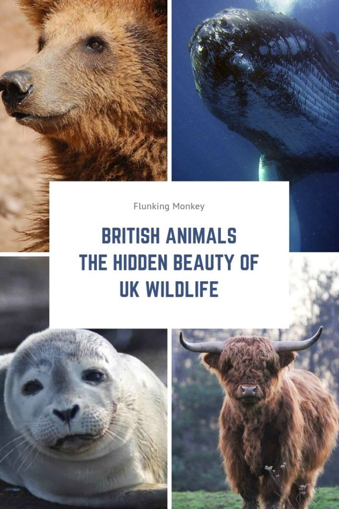 British Animals & UK Wildlife are Beautiful. See Animals Native to England - Eurasian Lynx, Highland Pony, Harbour Porpoise and many more Wild Animals in UK. www.woocommerce-448113-1403121.cloudwaysapps.com