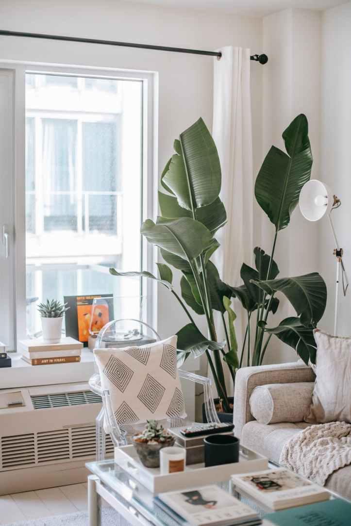decorative plant on living room