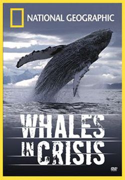 National Geographic: Киты в опасности / Whales in crisis