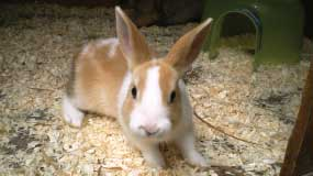 Bunny Rabbits – Now Available