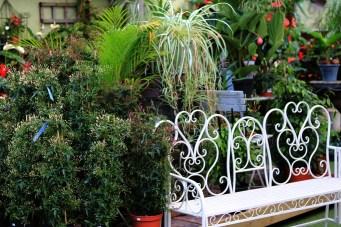 The House Plant Pavilion at Woodbank Nurseries