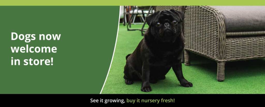 Dogs now welcome in store – Dog friendly