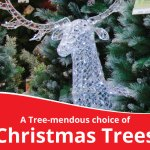 Tree-mendous selection of Christmas tress!