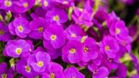 Spring colour 2018-3-2