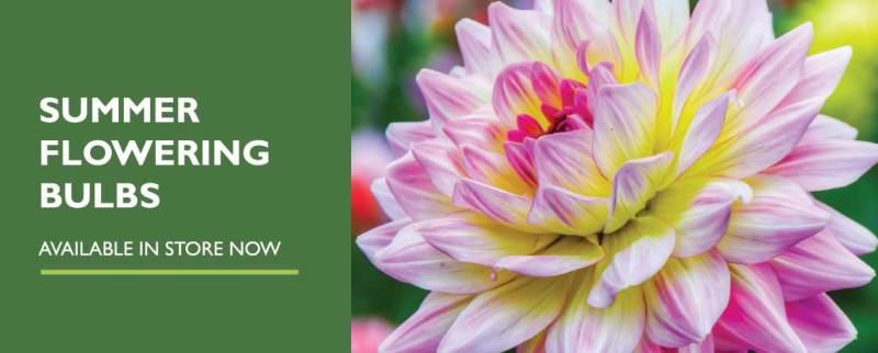 Summer flowering bulbs at woodbank garden centre