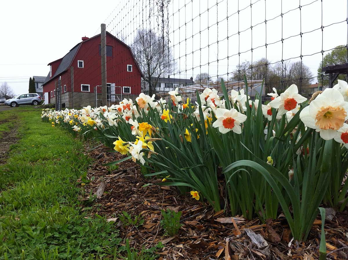Massaro Farm Events 4/12/19