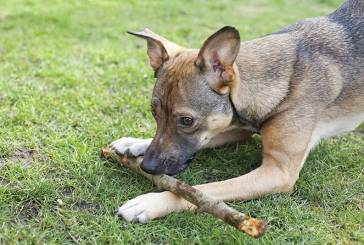 Bark Bytes… How To Greet A Dog Gently And Safely