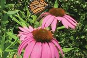 Garden Club to Hold Annual Plant Sale