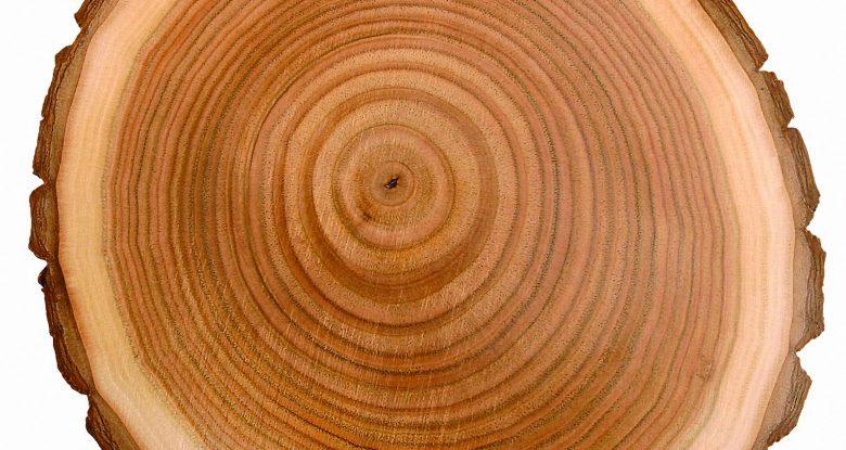 Pith Wood