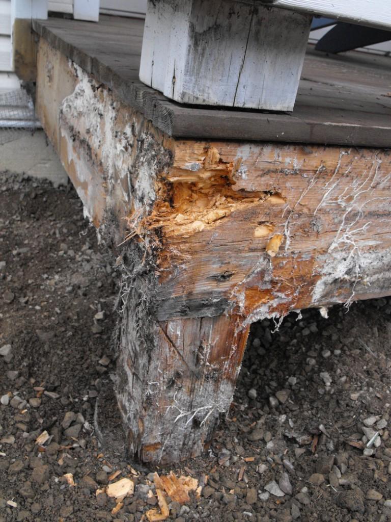 Painting Pressure Treated Wood
