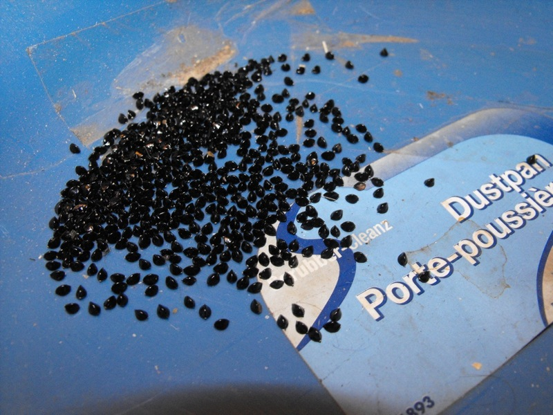 Seeds or something else